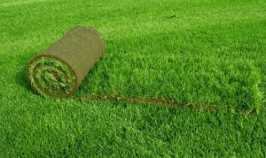 Рулонный газон можно перенести на другое место