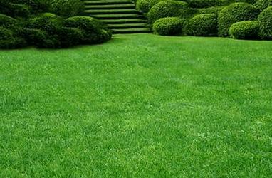 Как сажать газонную траву – видео и практические советы