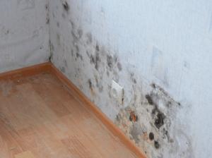 Как убрать черную плесень со стен