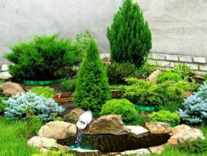 Альпинарий из хвойных растений