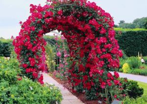 Цветочная арка - элемент декора участка