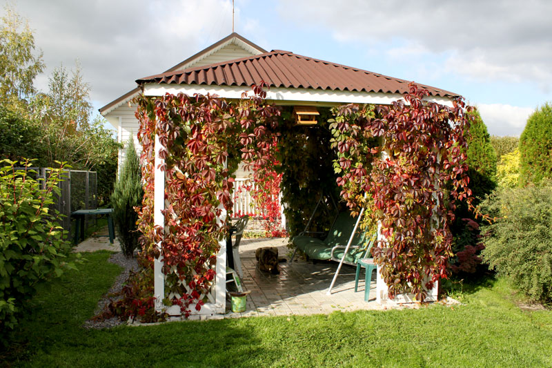 Виноградник дома своими руками