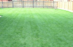 Газон с многолетней травой