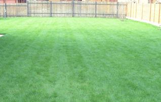 Как правильно посадить газон: особенности посадки, полива, ухода