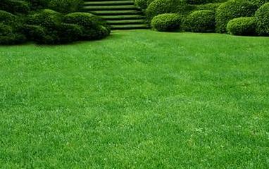 Газон в ландшафтном дизайне