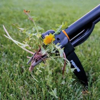 Как бороться с сорняками на газоне, применяя агротехнические и химические методы