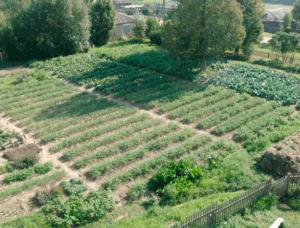 Оформление земли под ЛПХ в собственность