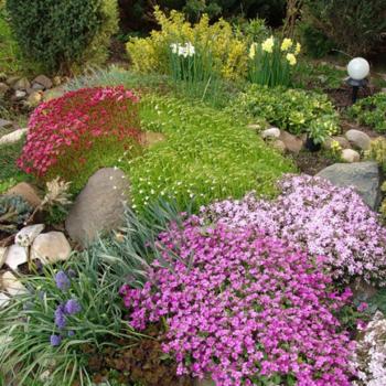 Альпинарий это сад на камнях: горка с хвойными растениями