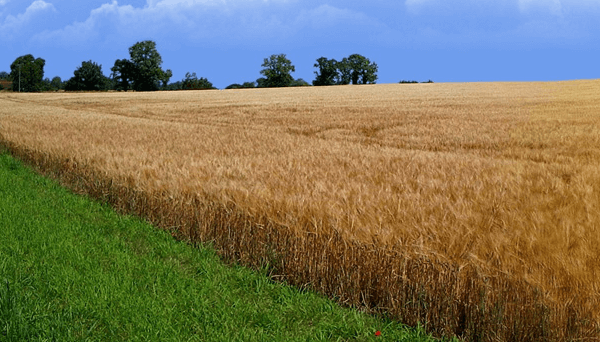 Можно ли строить дом на землях сельхозназначения или другие здания