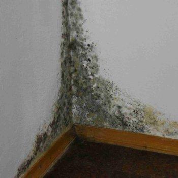 Обработка стен от грибка и плесени: технология, материалы, последовательность работ