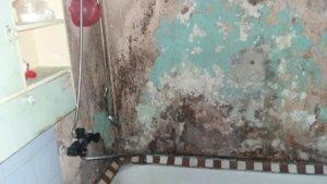 Грибок в ванной комнате